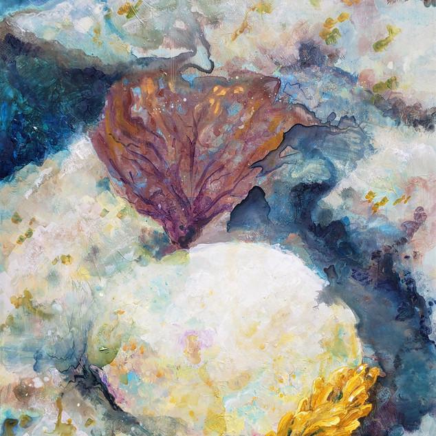 Memories of Dry Rock Reef