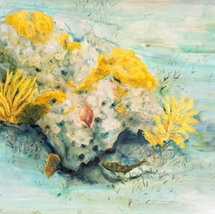 """A Subtle Surprise in Dry Rock Reef"""
