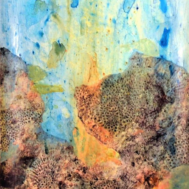 Corales Fosilizado #2