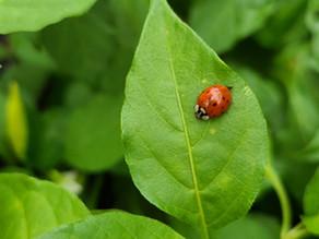 Novice Garden Tips