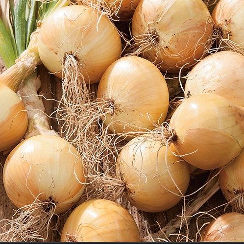 Ailsa Onion