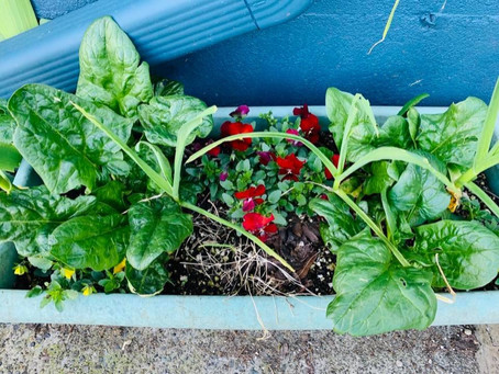 Small Space and Indoor Gardening Tips