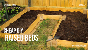 Cheap DIY Raised Beds