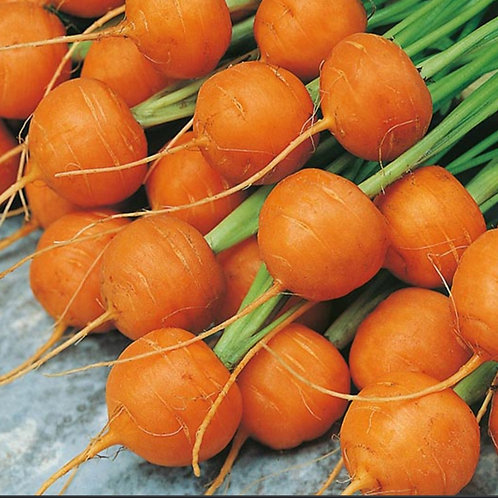 Round Atlas Carrot