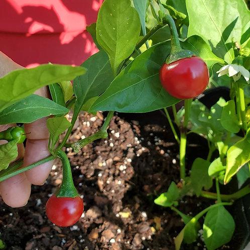 Sweet Cherry Pepper