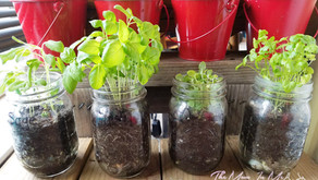 DIY Mason Jar Herbs