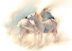 Zululand Zebras