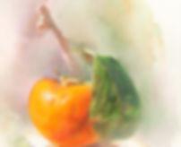 Persimmon Sm.jpg