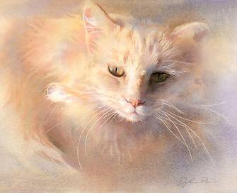 Pierce, Cat.jpg