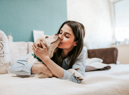CBD and Your Pets - Part 2