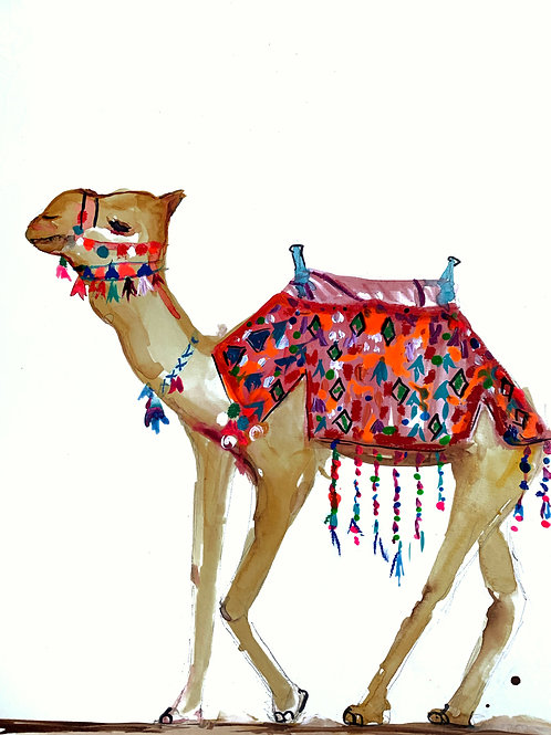 """Agafay Desert Camel"""