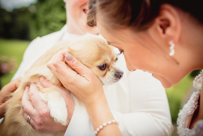 puppy at Coed Y Mwstwr