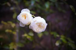 Miskin Manor Flowers