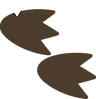 Dinosaur Footprints png