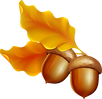 Fall Leaves with Acorn Clipart png