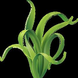 Seaweed01.png