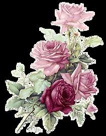 Burgandy Pink Rose Clipart png