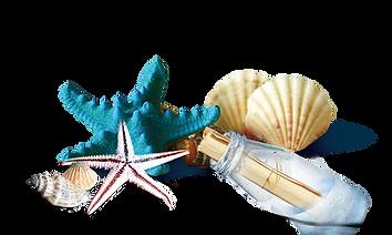 SeaShells Starfish Bottle Clipart png