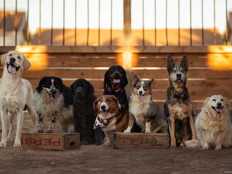 Nancy & Pups | Kingman Arizona Pet Photographer | Jo Lamsus Photography