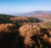 Macc-Forest.jpg