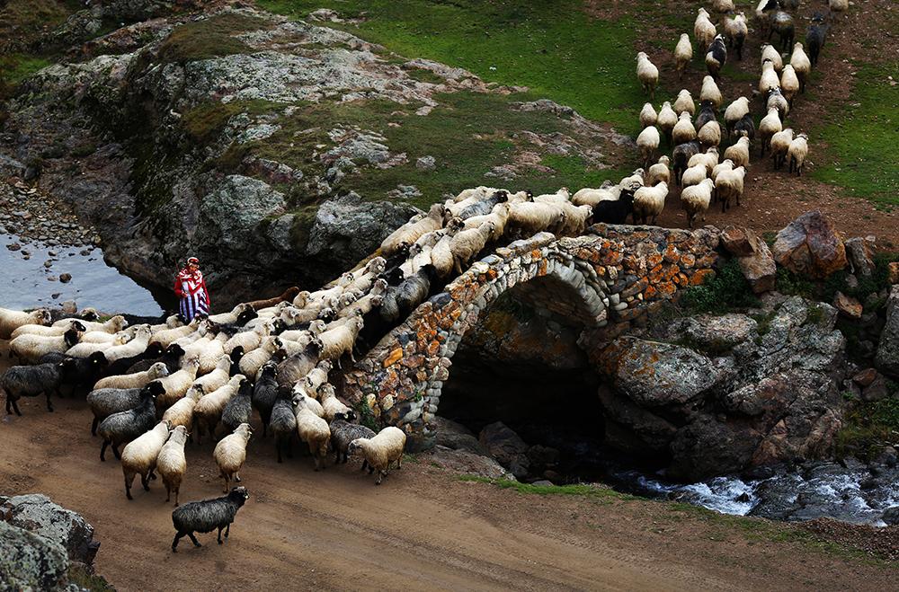 Taşköprü Yaylası-Gümüşhane