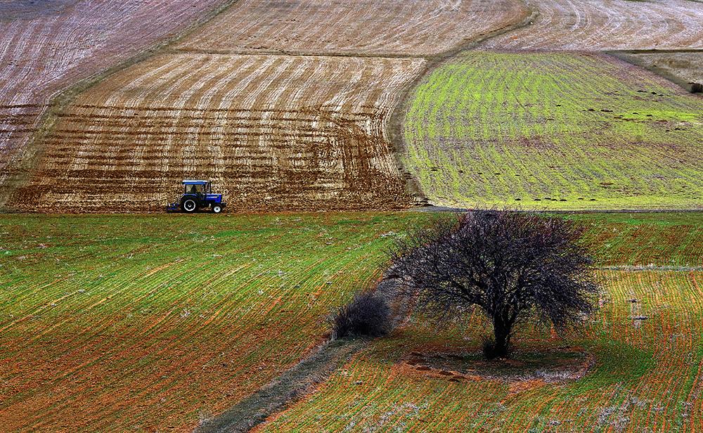 Tarım Alanı