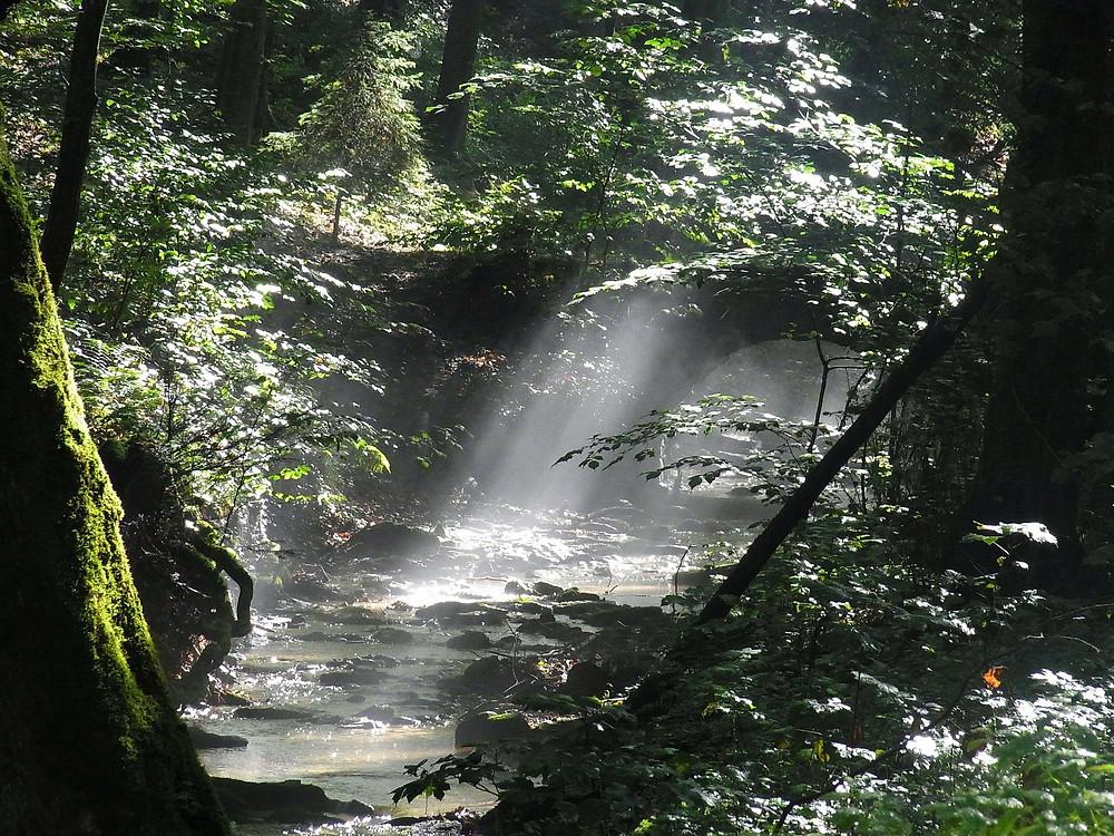 Fluss im Wald, Sonnenstrahlen durch die Blätter