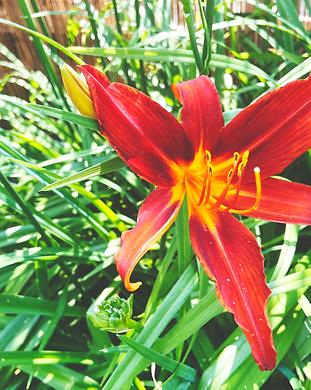 MA20_Garden_AnkeStraten (1).png
