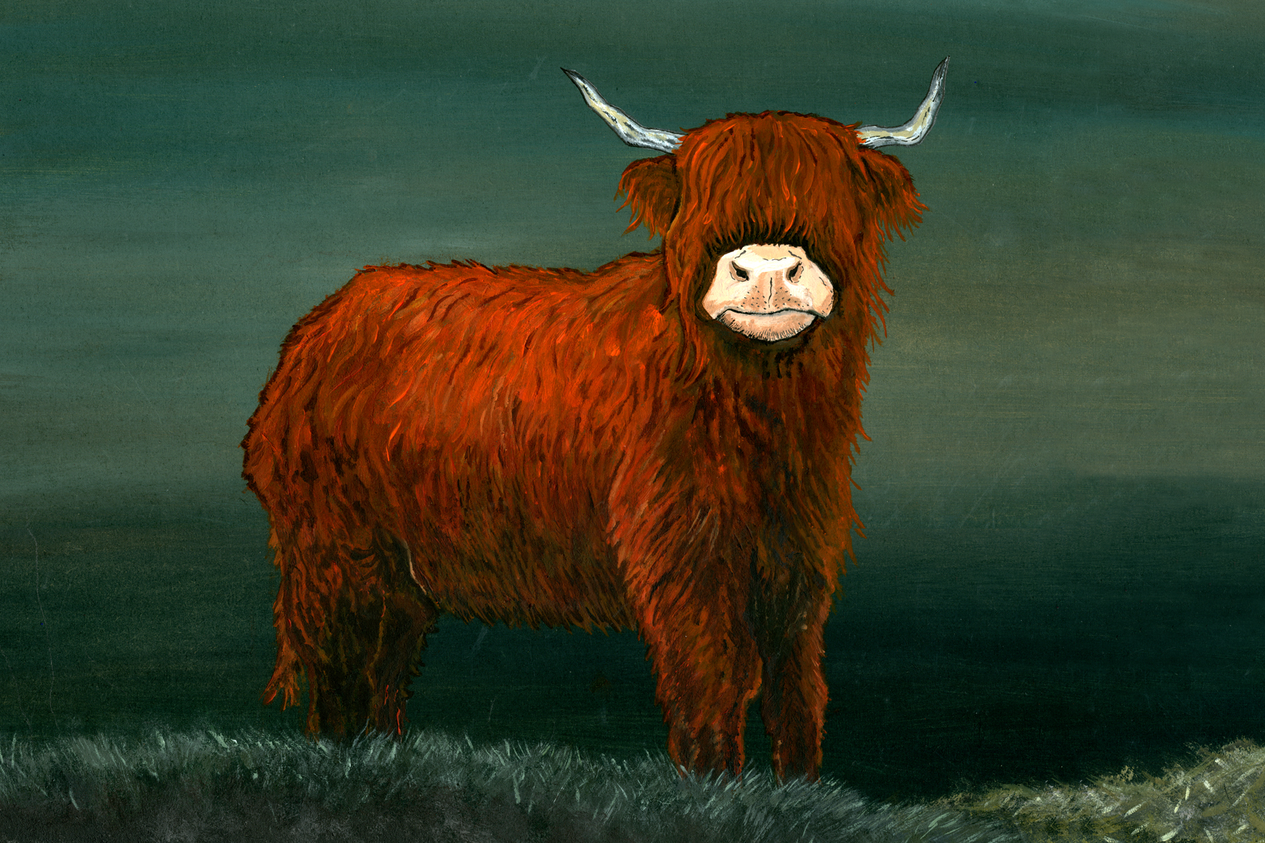 Highland Cow Alone