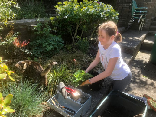 planting with binky.jpeg