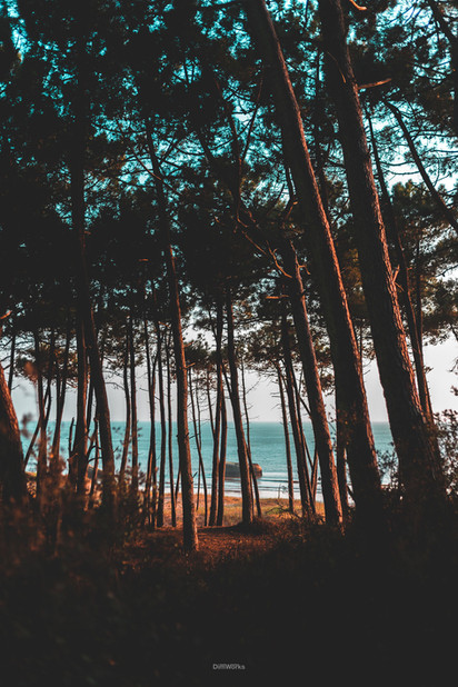 Foret vue mer