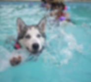 water-puppy-dog-animal-pool-swim-1021635