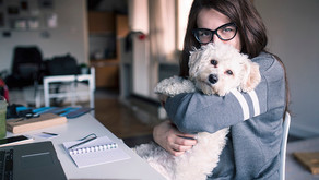 4 Tips To Make Working From Home With Dogs Easier
