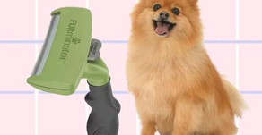 How to Remove Pet Hair From Practically Anything
