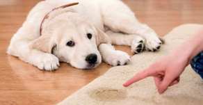 How to Potty Train a Puppy: A Comprehensive Guide for Success
