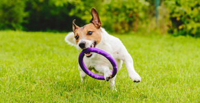 Top Dog Breeds For Retirees
