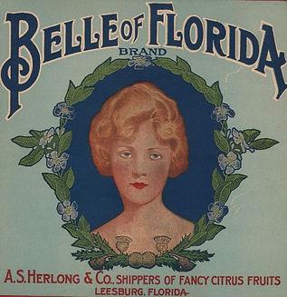 Belle of Florida Oranges Label