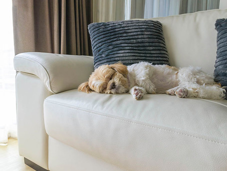 Protecting Your Furniture From Dog Hair And Nails