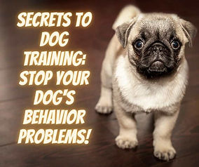 Stop Your Dog's behavior Problems-compressed.jpg