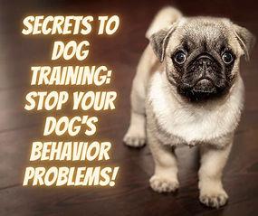 Stop Your Dog's behavior Problems