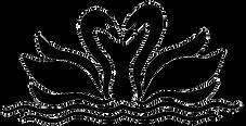 Black swans_trans.png