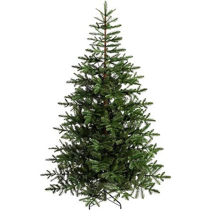 Christmas Tree, Nordmann Fir 200-250cm