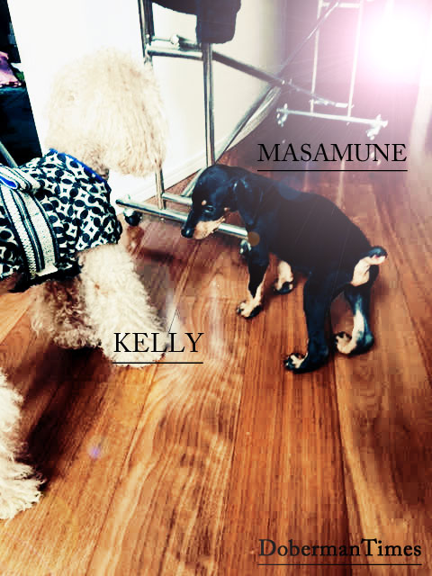 MASAMUNE(♂/2ヶ月)&KELLY(♂/8歳)