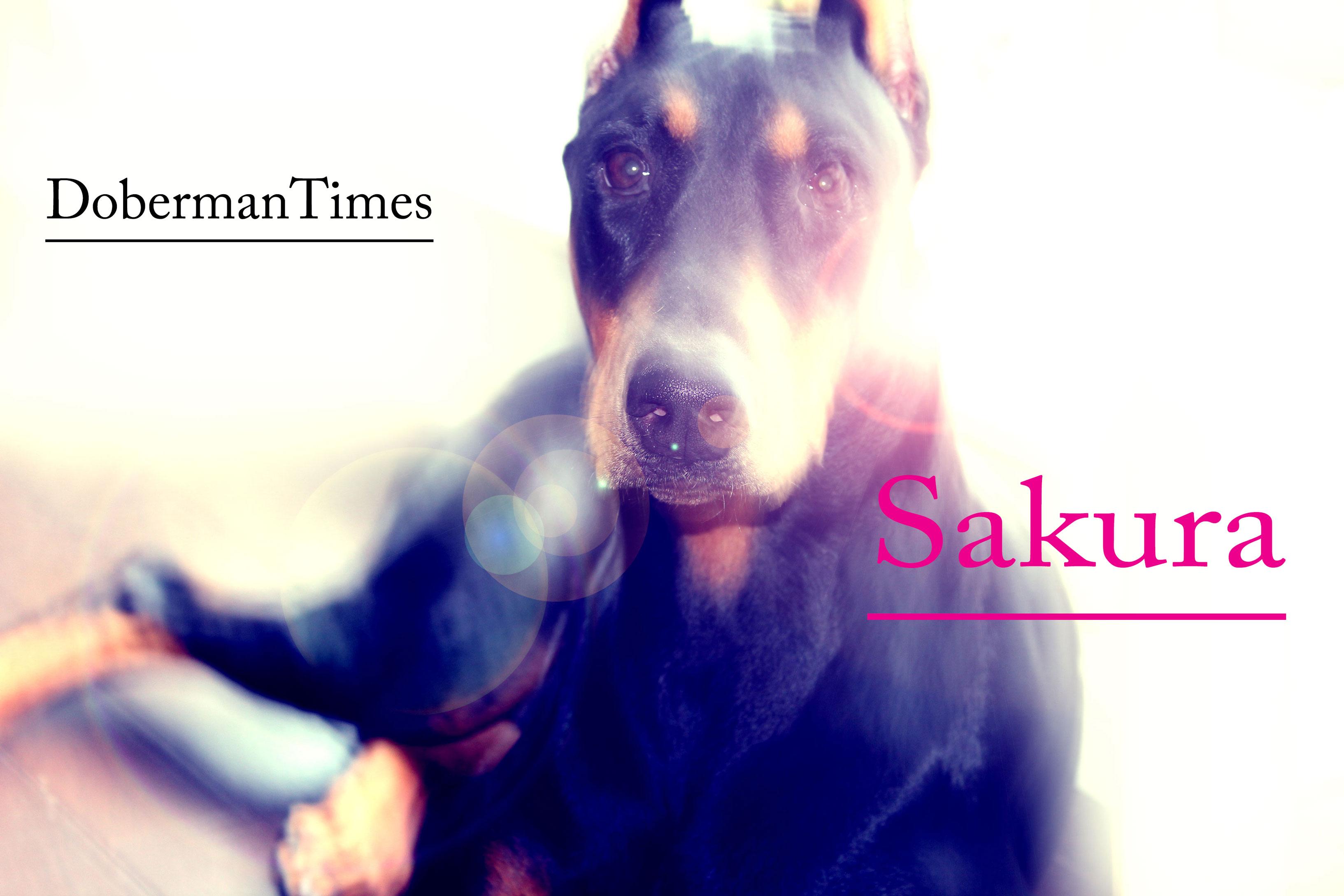 Sakura(♀)