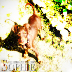 Sophie掲載
