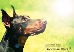 Doberman's
