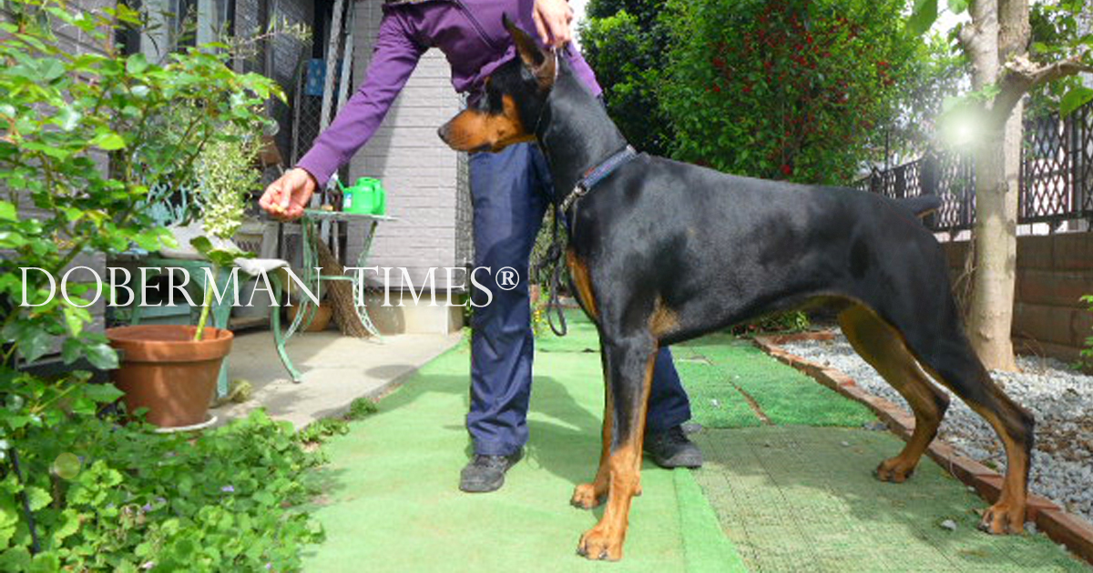 Bolt's Dog Show