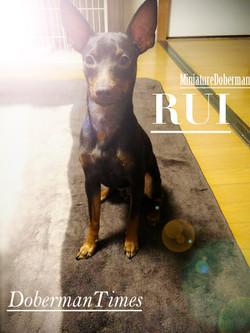 RUI(♂・8ヶ月)