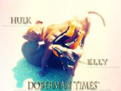 Doberman(♀)&PitBull(♂)