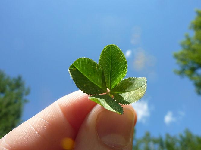 four-leaf-clover-19776_1920.jpg